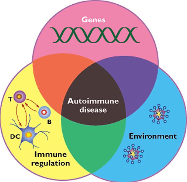 Autoimmune Chart